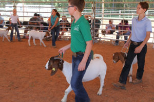 Cover photo for Photos from the 8th Annual Chatham County 4-H Livestock Show
