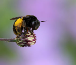 Cover photo for Summer Snapshots From Extension's Pollinator Paradise Garden