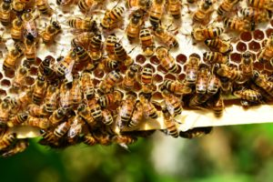 Cover photo for FEB 24-25  Beginner's Beekeeping Intensive