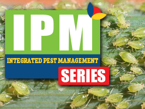 IPM Series Graphic