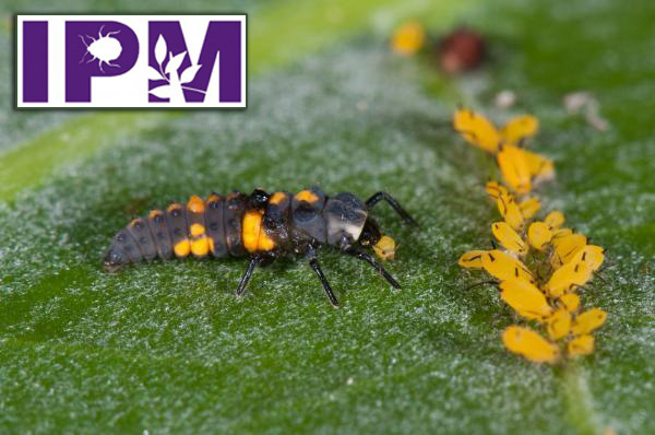 Insect on leaves with IPM logo