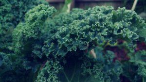 dark green leafy Kale