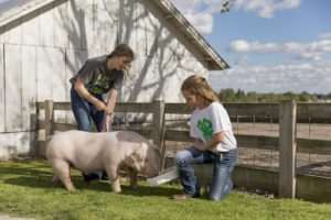 Cover photo for Exciting NC 4-H Livestock Opportunities Available Soon