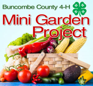 Cover photo for 2020 4-H Mini Garden Project