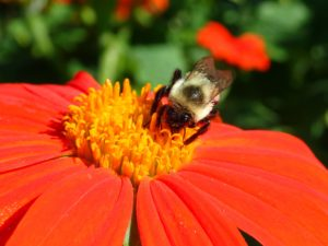 Cover photo for Join the Virtual Pollinator Field Day on June 22