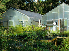 Cover photo for Greenhouse Grower Webinar Series 2021
