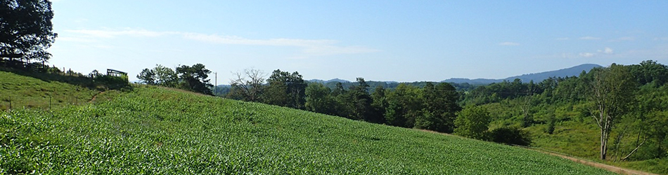 NC rolling green land with blue sky