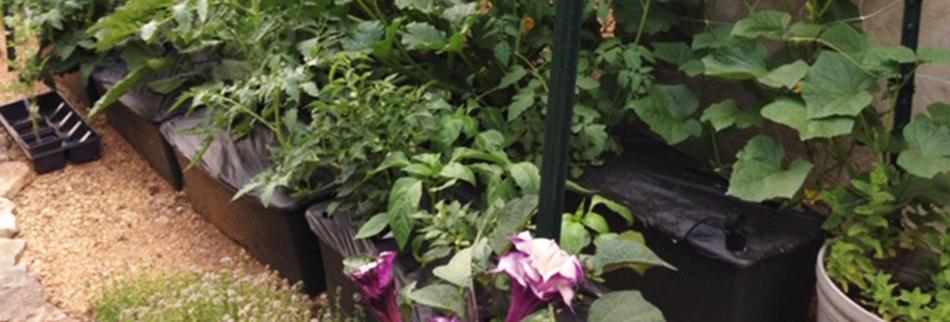 earthboxes in garden