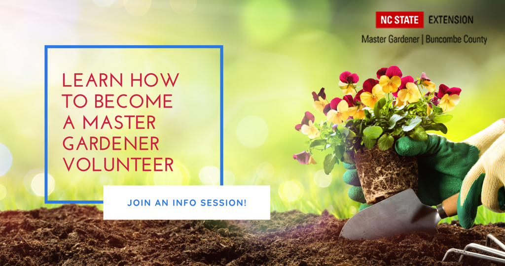 Learn how to become a master gardener volunteer.