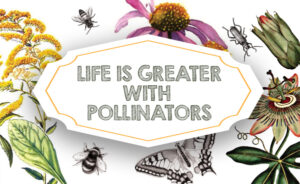 Life is greater with pollinators