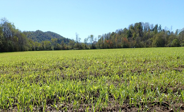 Field with newly planted cover crop.
